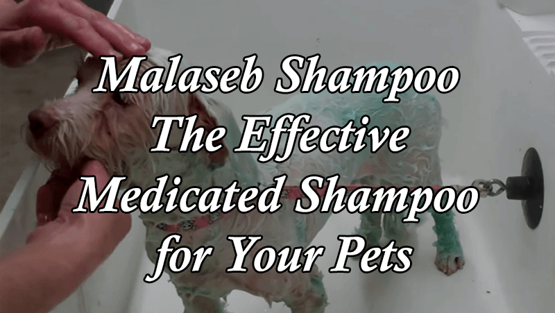 The Effective Medicated Shampoo for Pets