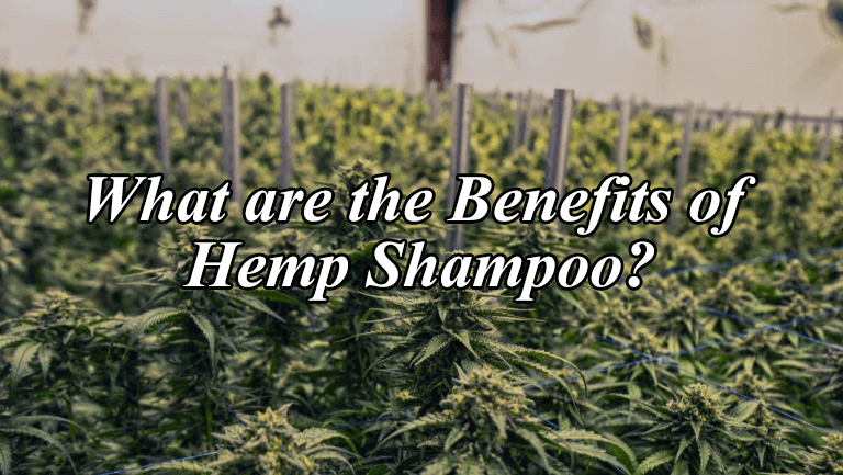 Hemp Shampoo Benefits